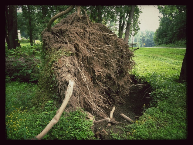 Unrooted (Photo: CKirgiss)